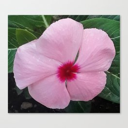 Simplicity in a Pink Flower Canvas Print
