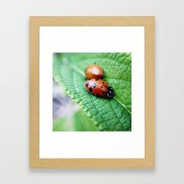 snuggle Framed Art Print