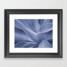 Blue Agave Attenuata Framed Art Print