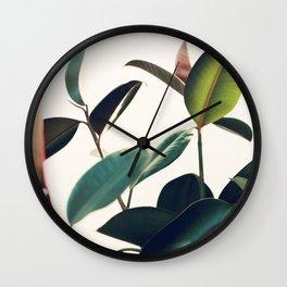 Ficus Elastica #8 Wall Clock