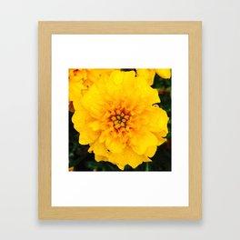 Mari Is Golden Framed Art Print