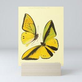 Lepidoptera Butterfly Pattern WFK Cottagecore Lithograph Print Mini Art Print