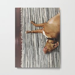 big beefy sleepy pitbull Metal Print