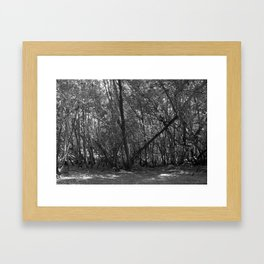 A Forest In The Park Framed Art Print