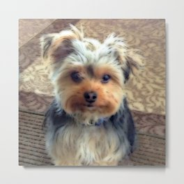 Always Thinking of You... | Yorkie | Dogs | Nadia Bonello Metal Print