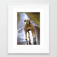 pitbull Framed Art Prints featuring Pitbull  by christinelabossierephotography