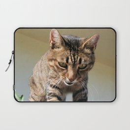 Tabby Cat Looking Down From A Height  Laptop Sleeve