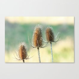 Look out - prickly plant ! Canvas Print