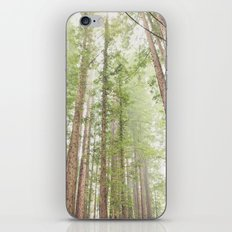 Giant Redwoods iPhone & iPod Skin