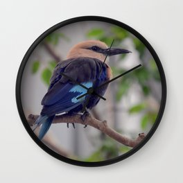 National Aviary - Pittsburgh - Blue Bellied Roller Wall Clock