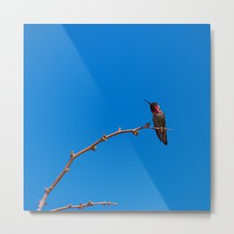 Beautiful Hummer - II Metal Print