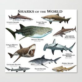 Sharks of the World Canvas Print