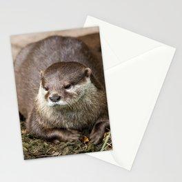 Sunning Otter Stationery Cards