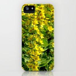 Goldfelberich iPhone Case