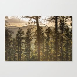 Mountain Forest New Mexico - Nature Photography Canvas Print