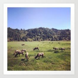 Elk Reserve Art Print