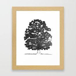 Chestnut Tree Framed Art Print