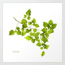 Green Leaf Art Art Print