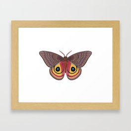 io moth (Automeris io) female specimen 1 Framed Art Print