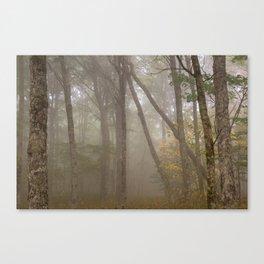 Misty Spruce Knob Forest Canvas Print