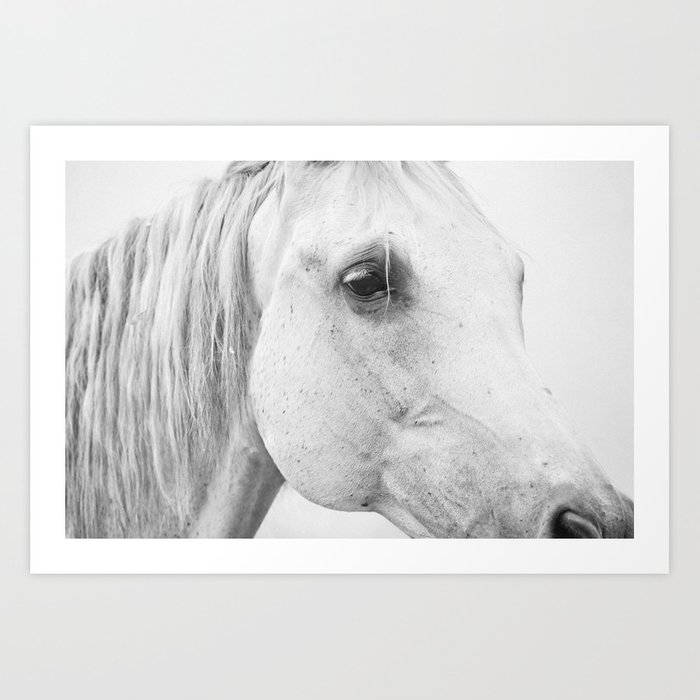 Horse Photography   Wildlife Art   Farm animal   Horse Eye Closeup   Animal  Photography Art Print by wildhood
