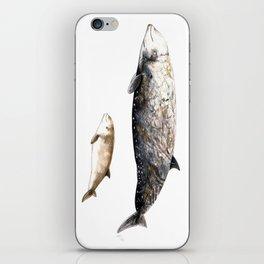 Cuvier´s beaked whale iPhone Skin