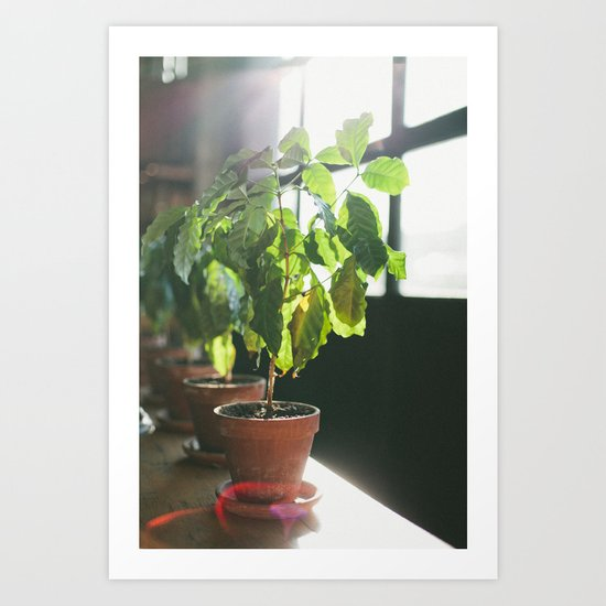 Potted Plant Art Print