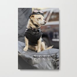 Small Biker Dog with a black outfit Metal Print