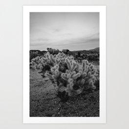 Cholla Cactus Garden IX Art Print