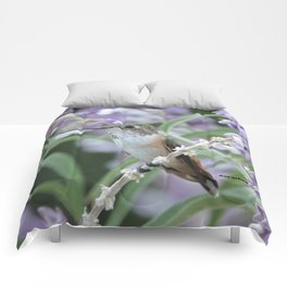 Ms. Hummingbird's Break Time in Mexican Sage Comforters