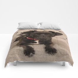 Black Jack Russell / Chihuahua Comforters