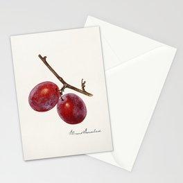 Plum (Prunus Domestica) nd Stationery Cards