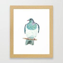 Kereru / Woodpigeon - a native New Zealand bird 2014 Framed Art Print