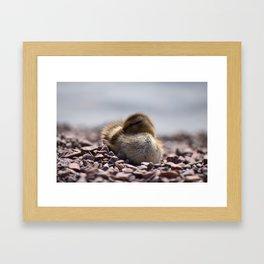 Sleepy Duckling Framed Art Print
