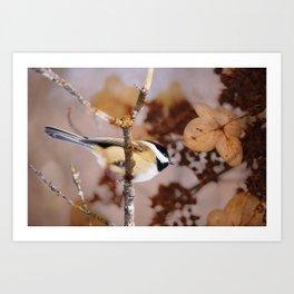 Birds :: Winter Chickadee Art Print