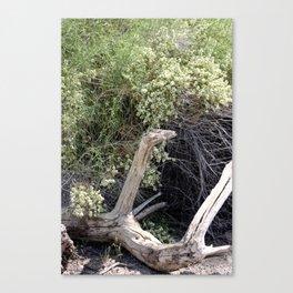 Weathered Log in Coachella Valley Wildlife Preserve Canvas Print