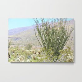 Spring in the Desert with Octotillo by Reay of Light Photography Metal Print
