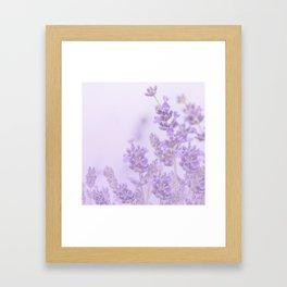 Lovely Lavenders Pastel Purple Background #decor #society6 #buyart Framed Art Print