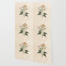Honesty - botanical Wallpaper