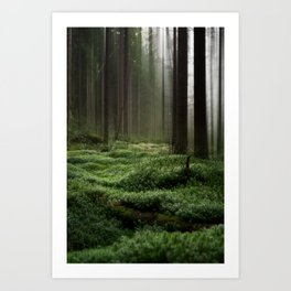 Forest Dream I Art Print