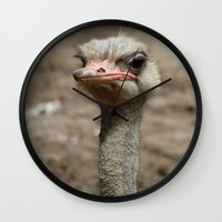 ostrich Wall Clocks featuring Ostrich by S0ultrain Photography
