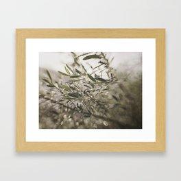Olive Tree Leaves in the Mist Framed Art Print