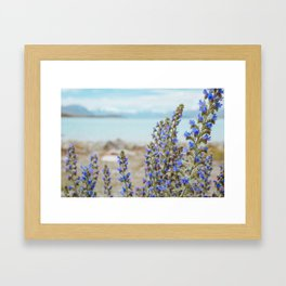 Lake Tekapo Flower Delight Framed Art Print