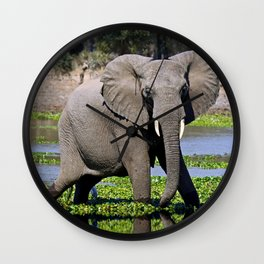 Elephants in the water - Africa wildlife Wall Clock