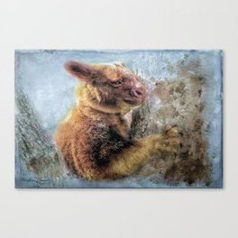 Tree Kangaroo Canvas Print