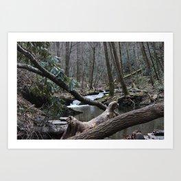 Wooded Waters Art Print