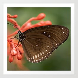 Butterfly On A Flower Art Print