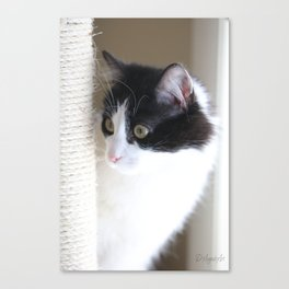 Curious Kitty Canvas Print