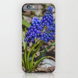 Grape Hyacinth 4 iPhone Case
