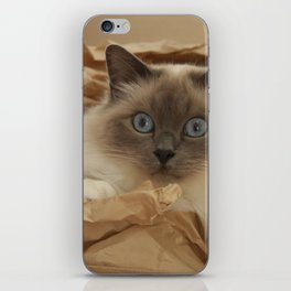 Cat in a Box iPhone Skin